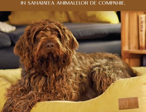 Ce inseamna magnetoterapia? Importanta si beneficiile acesteia in sanatatea animalelor de companie.