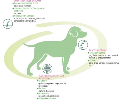 Abordarea terapeutica a alergiilor alimentare
