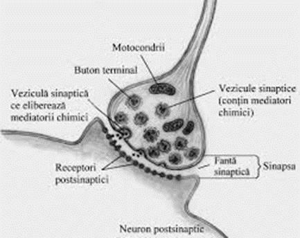 pierderea în greutate a bolii neuronului motor